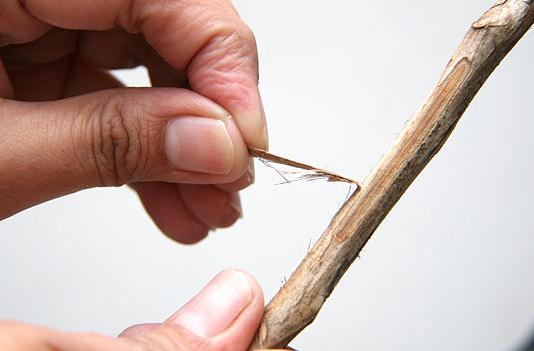 Peel Bark
