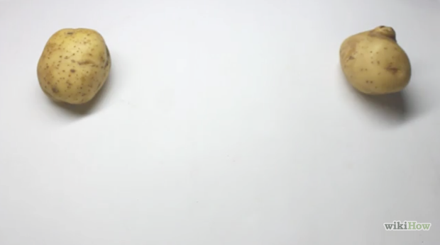 Make Your Own Potato Clock - At Home Science Project for Kids step 1