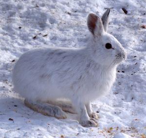 Winter Scavenger Hunt for Kids